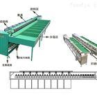 XGJ-Z水果分级设备 四川果蔬分选机 一机多用