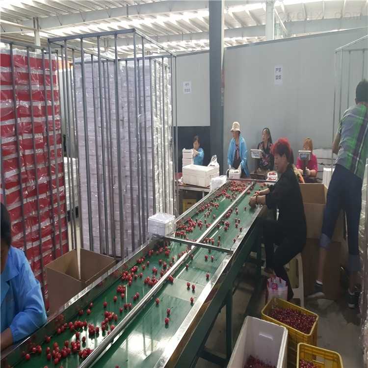 红灯预冷选果分级机 直径分选樱桃的好设备