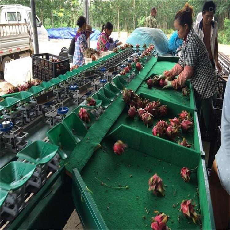 卢龙新款红薯分选机节省人工成本的好设备
