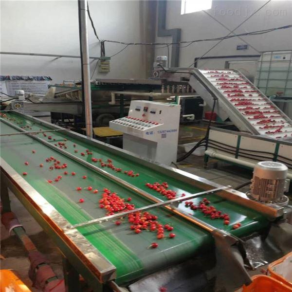 枣庄山亭小型樱桃选果机为樱桃分级