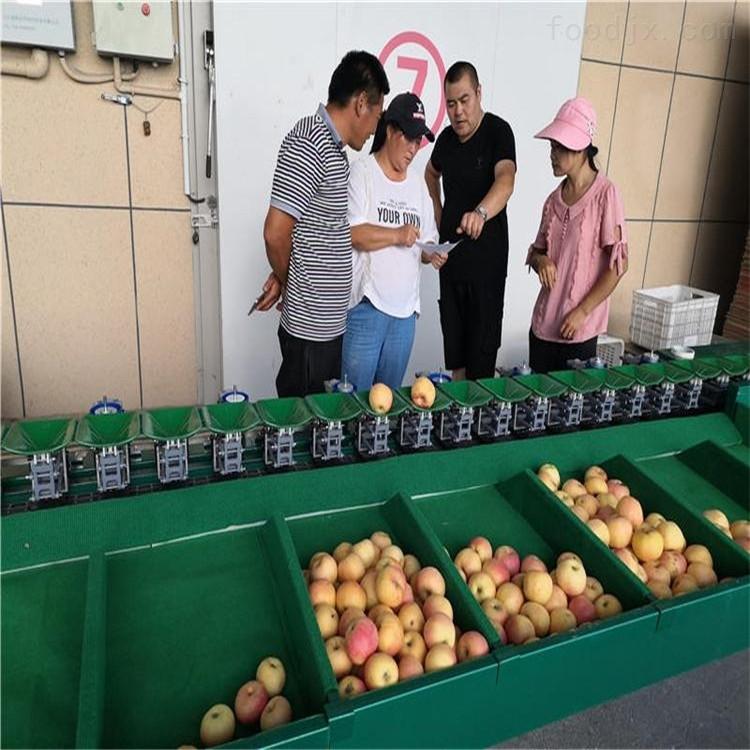 陕西富士苹果选果机 机械水果分选机