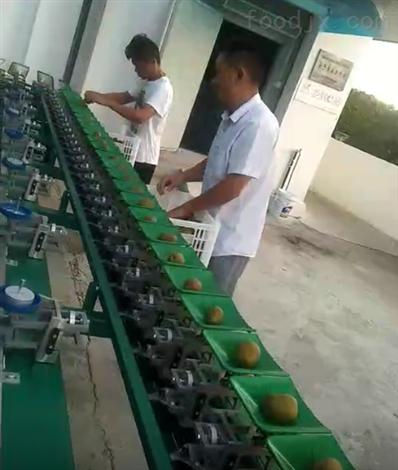 贵州修文分级设备  猕猴桃分选机