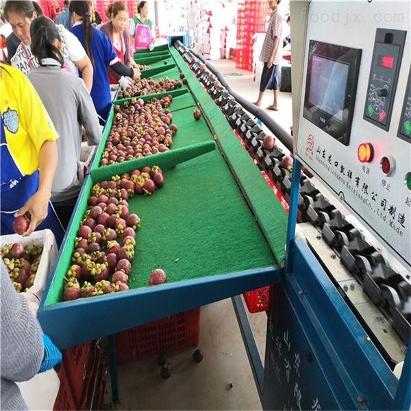 海南山竹分选机水果选果机分级机自动分果机