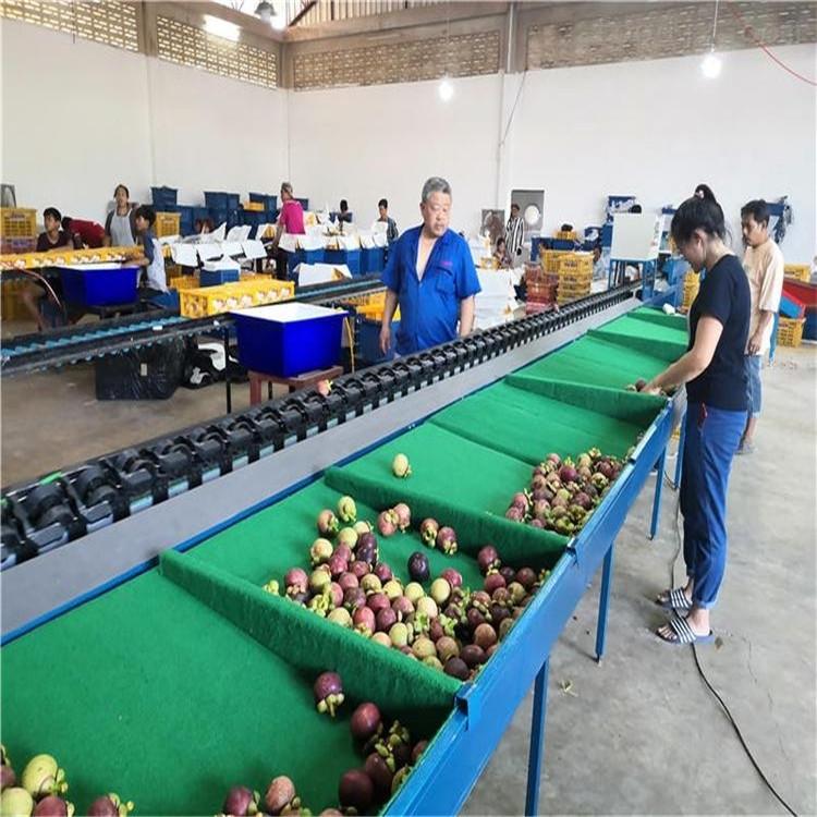 百香果分级设备电脑分选机果蔬处理机