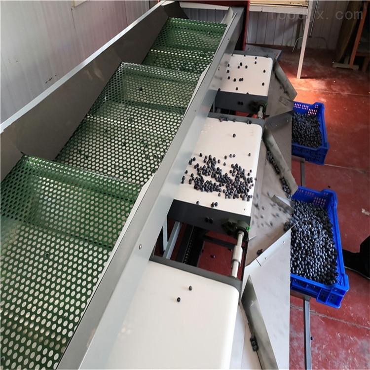 青岛蓝莓分选机 机械分大小的水果选果机