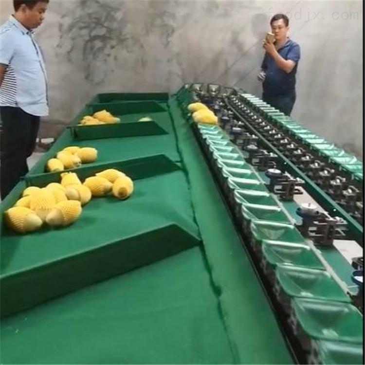 广西百色桂七芒果分选机  不伤果的设备