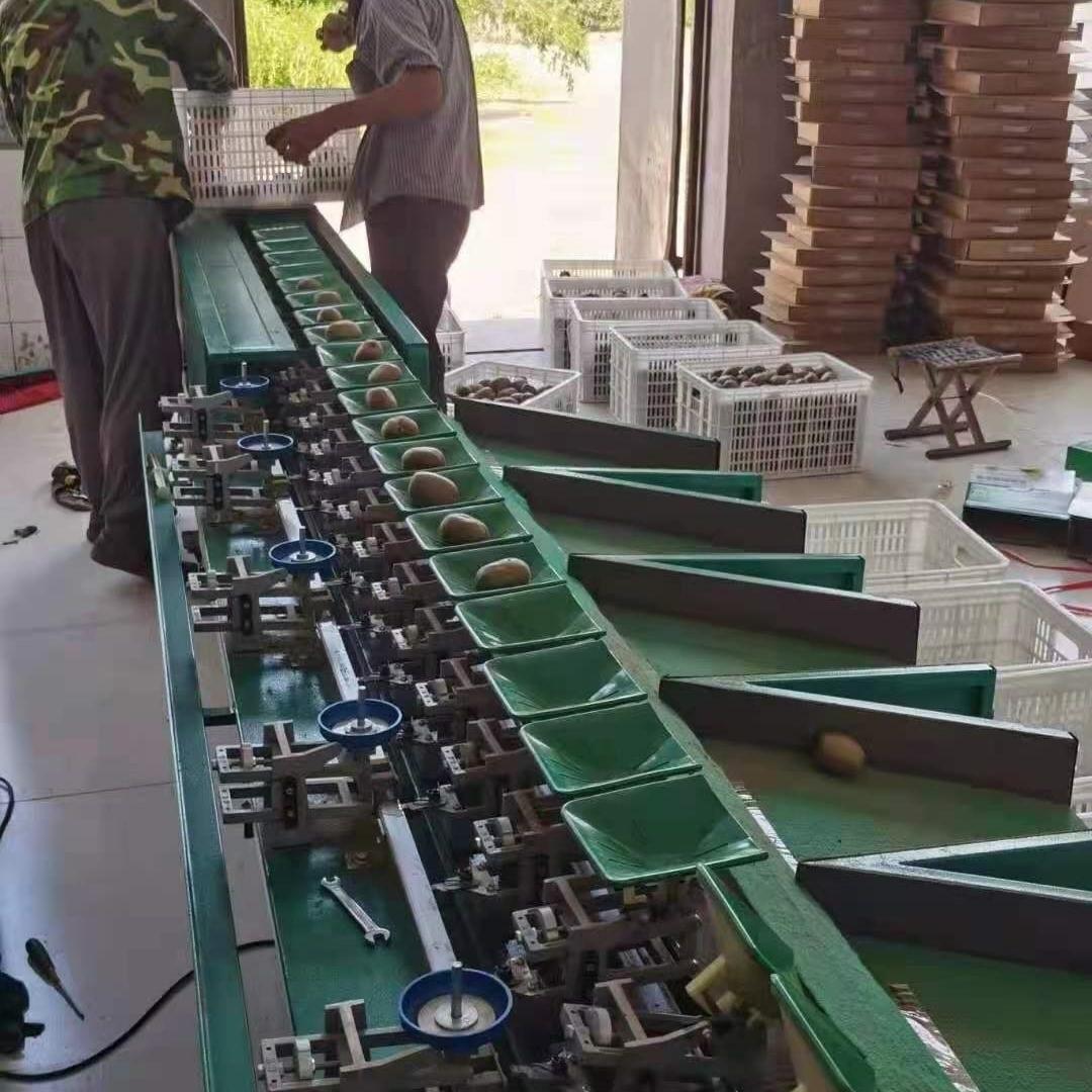 翠香猕猴桃选果机  河南分果设备