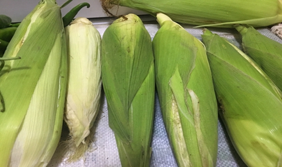 2020年玉米免耕播種機質量調查結果出爐!