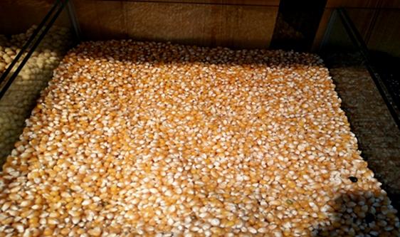 春耕在即 加強農資檢測守護農業生產