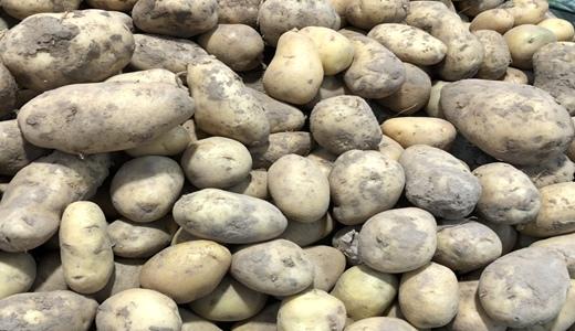 花式玩法促恩施土豆产业发展 拓宽地方增收致富路